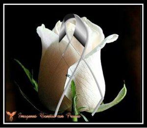 rosa blanca con moño de luto
