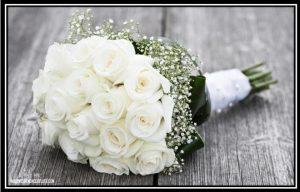 imagenes rosas blancas hermosas