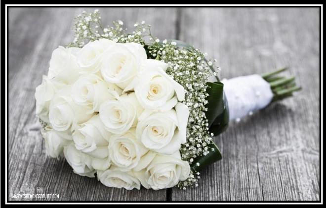 Imágenes De Rosas Blancas De Luto Para Descargar