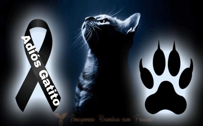 imágenes de luto para gatos